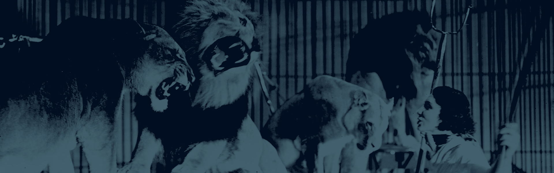 Strong digital vintage circus image of lions